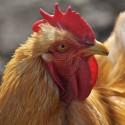 Pour Consommation animale
